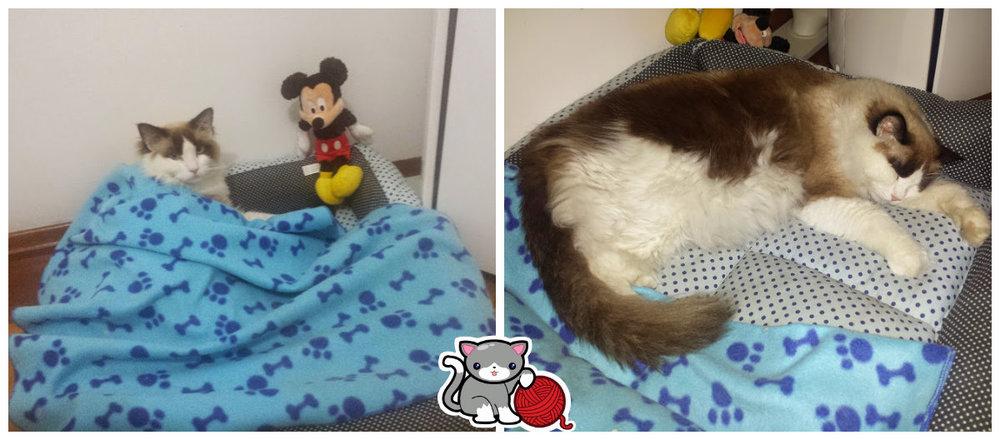 O gato e o rato! O Link adora o Mickey... hahahaha