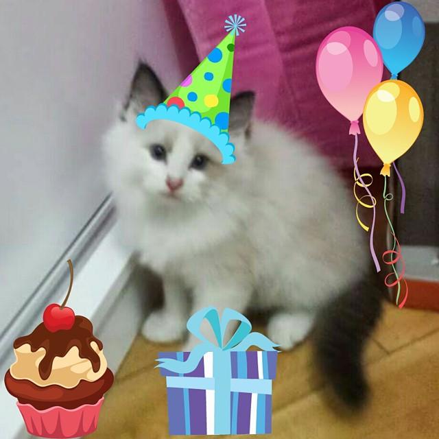 Montagem tosca para comemorar o aniversário do baby Link