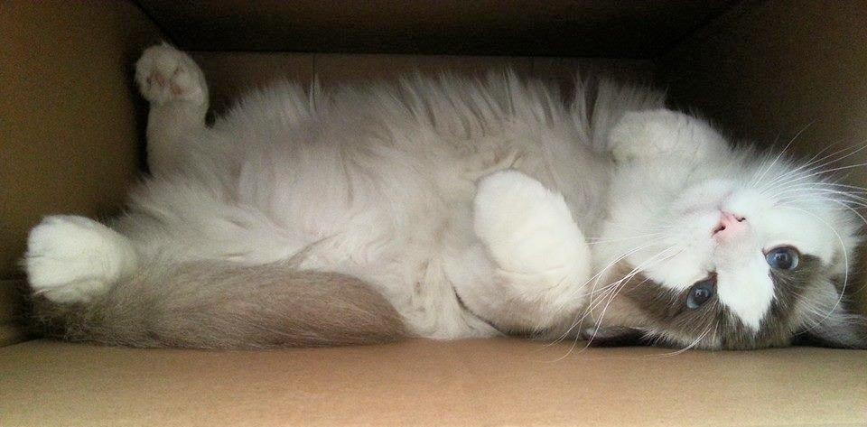 kitty-pet-cat-link,omascotinho.jpg