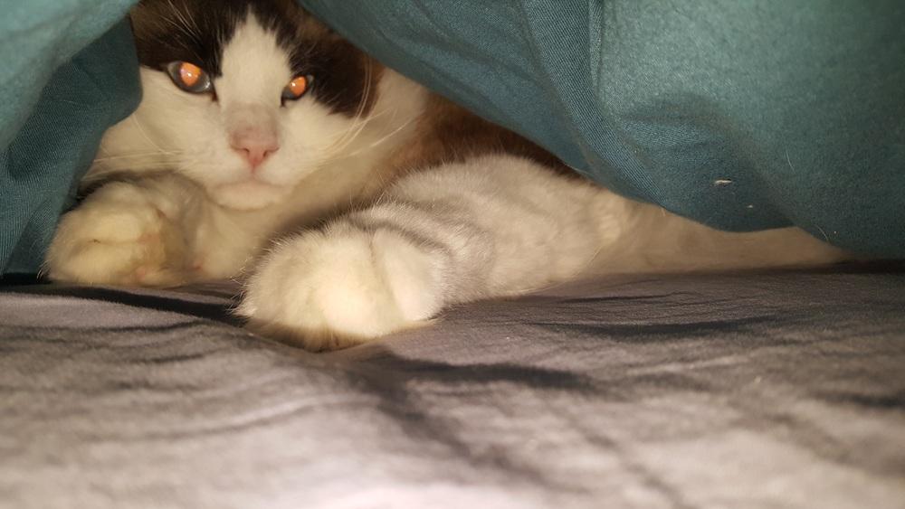 Link, gatinho mais preguiçoso e friorento!