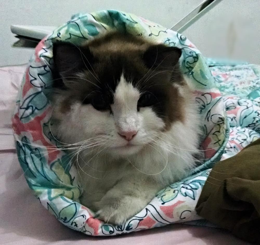 Sushi de gato! Link enroladinho