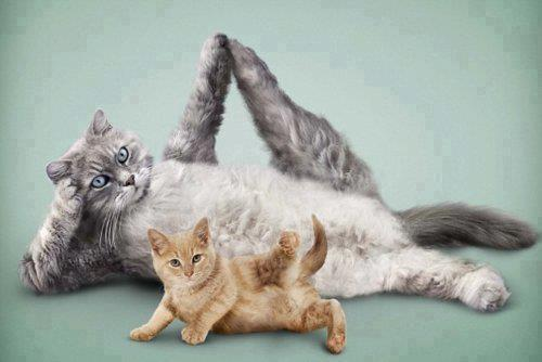 pilates cat.jpg