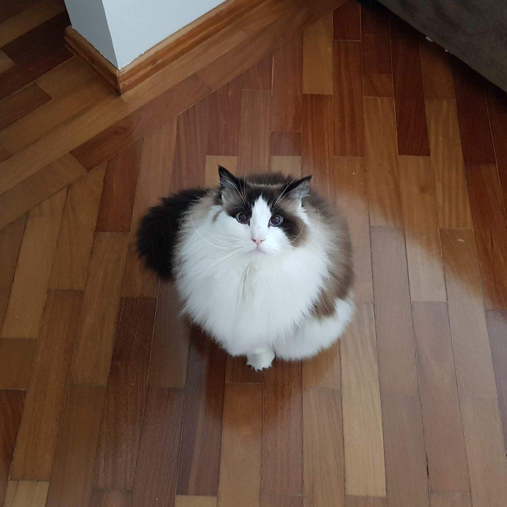 link-gato.jpg