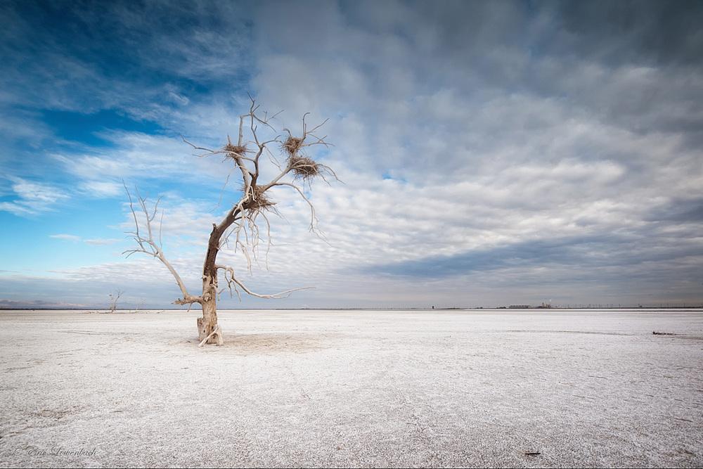 Aerie. Salton Sea, California.