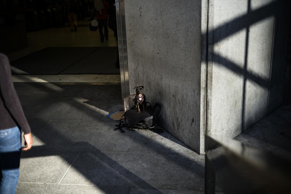 L1006497 dog waiting B.jpg