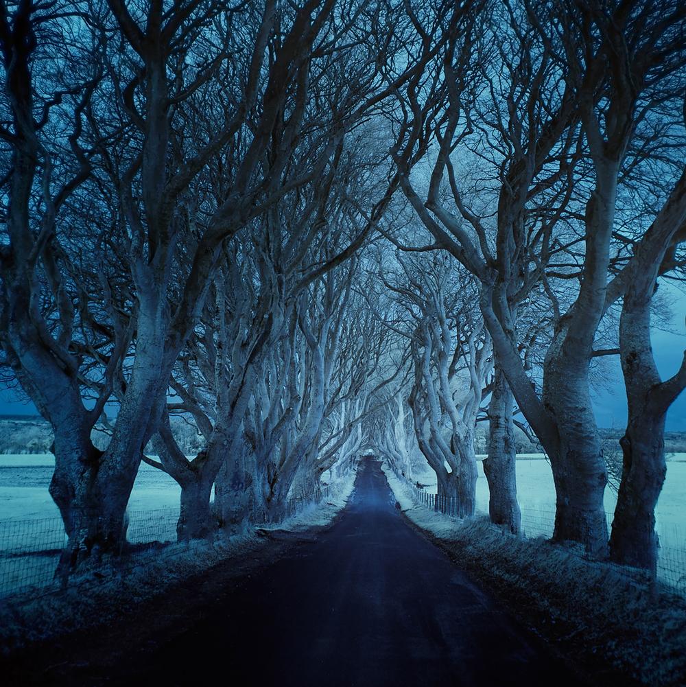 Roads_DarkHedgesIR_AndyLee©2015.JPG