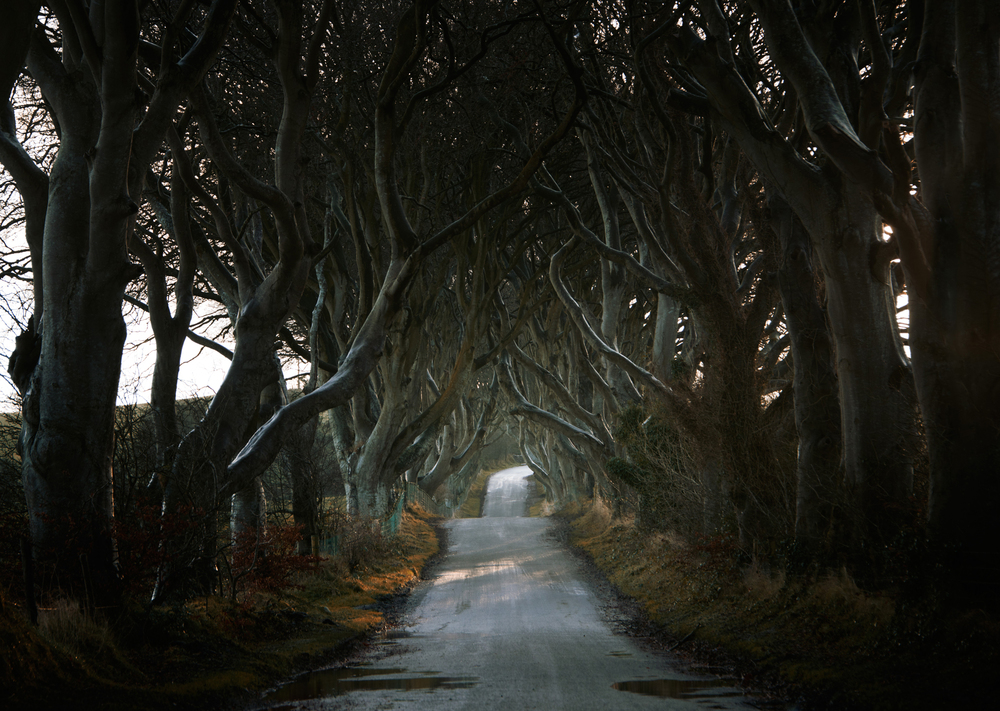 Roads_DarkHedges_AndyLee©2015.JPG