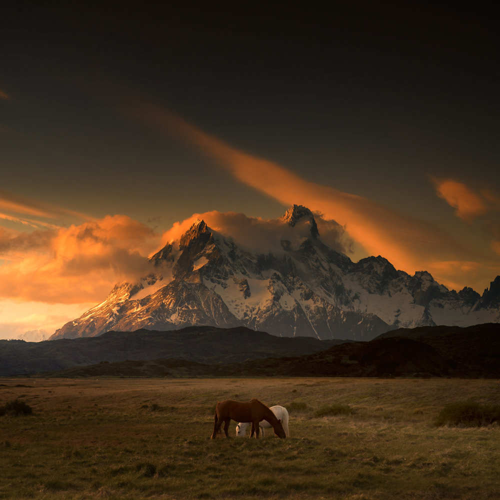Patagonia_©andylee2016_horses_pat_07.jpg