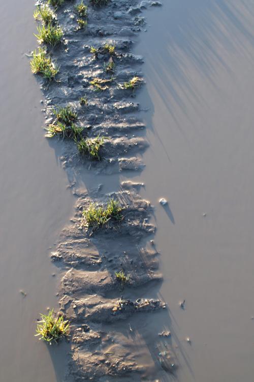 muddy_puddle_.jpg