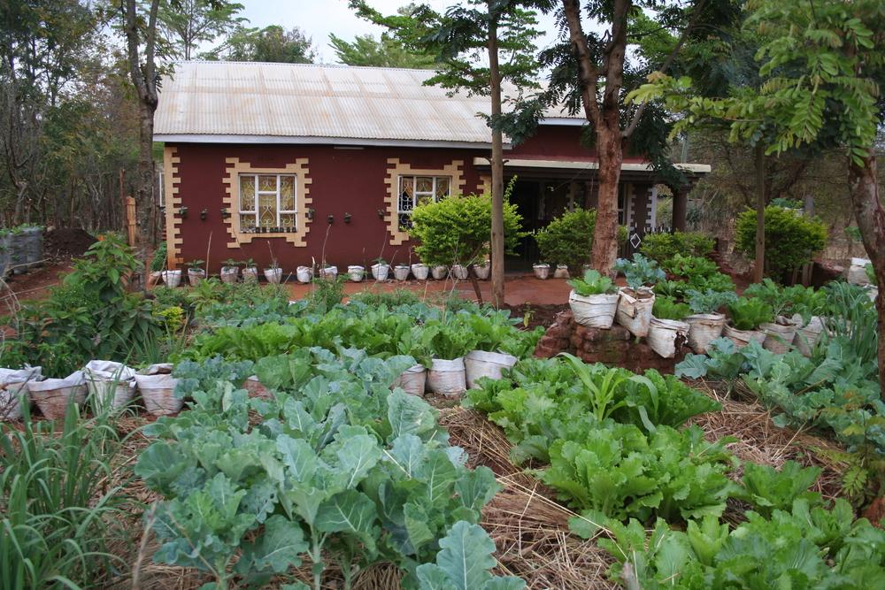 Livingstone Tanzania Trust, edible gardens project