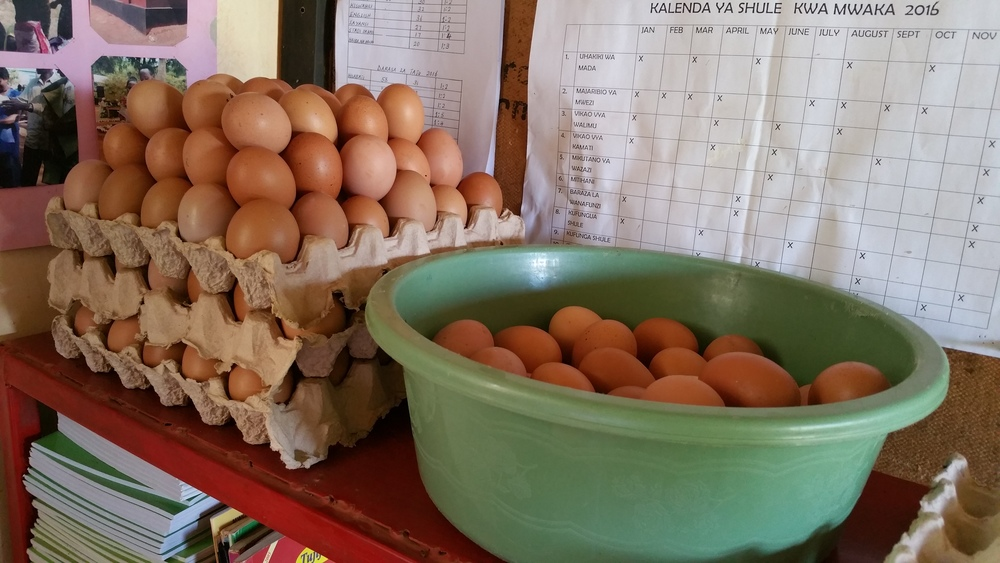 Eggs being collected and prepared for market