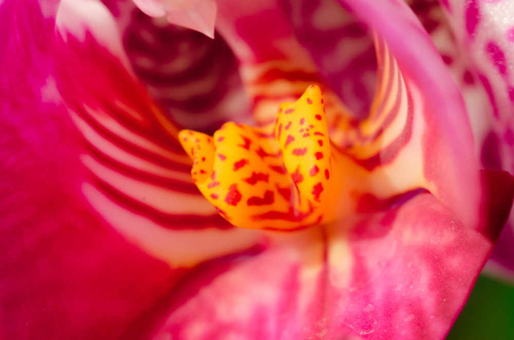Photo by Anthony Cernera 2014 - Surprise... not a Buddha! (I named this flower Buddha though...)