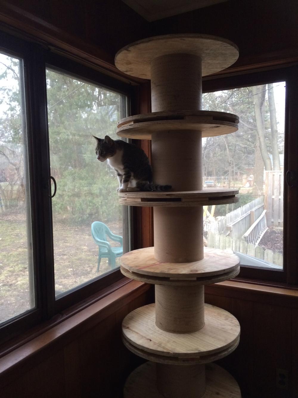 Or, cat climby tree....