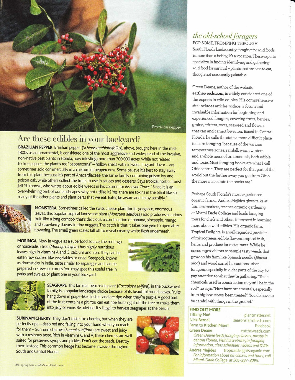 Edible South Florida Forager_Page_6.jpg
