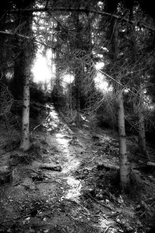 27-Forest.jpg