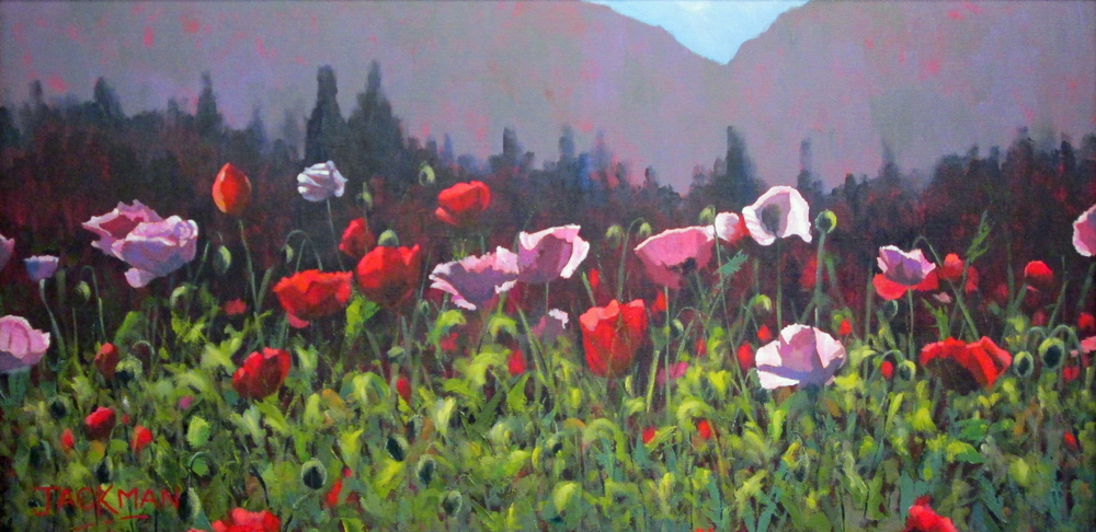 Mountain Poppies