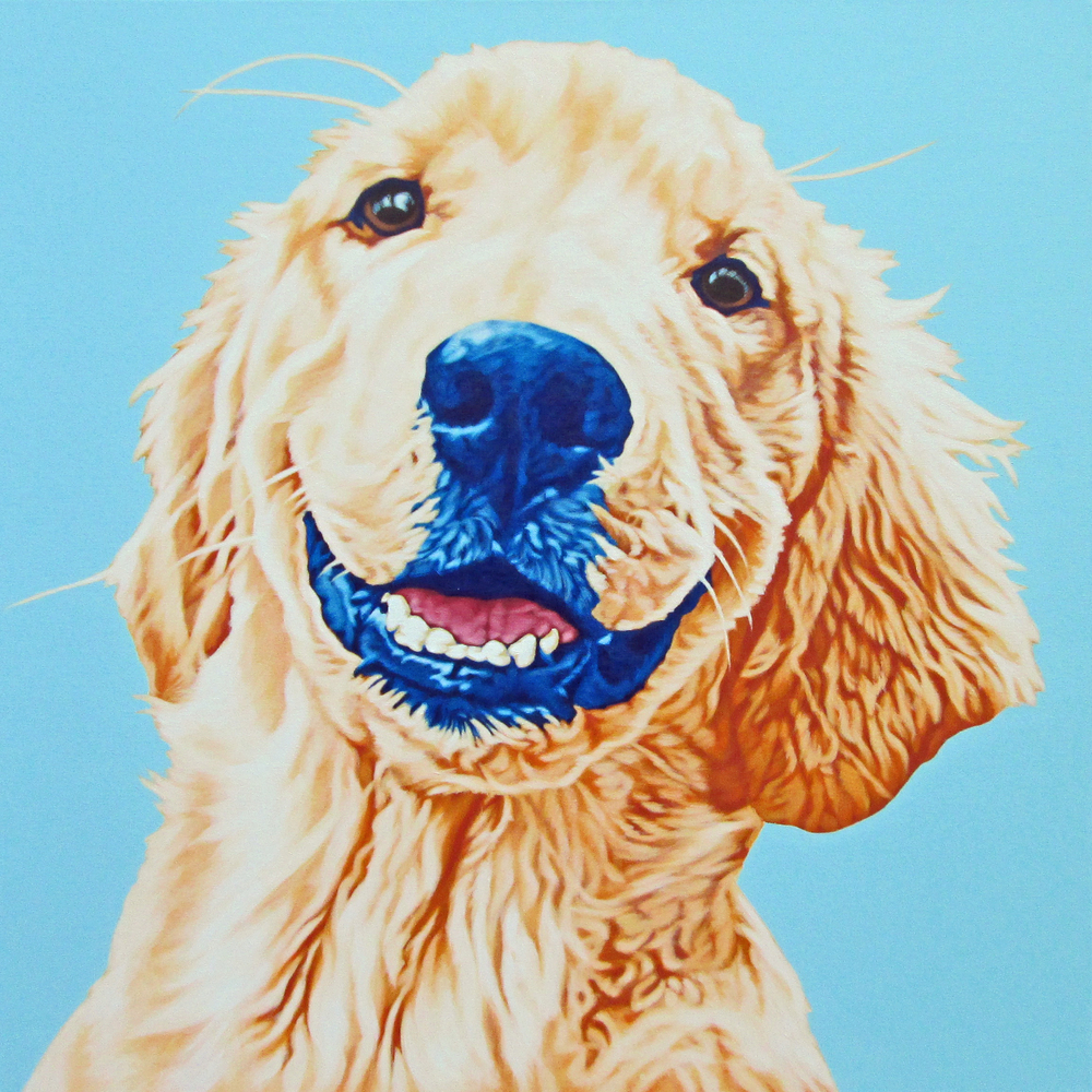 Skipper - Golden Retriever