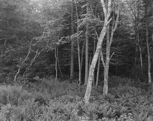 © George Tice. Woods, Port Clyde, Maine.