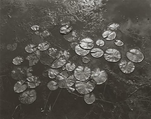 """© George Tice. """"Aquatic Plants #8, Helmetta, NJ, 1967"""""""