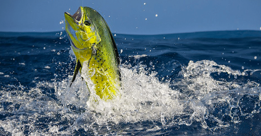 Photo Source: Sport Fishing Magazine