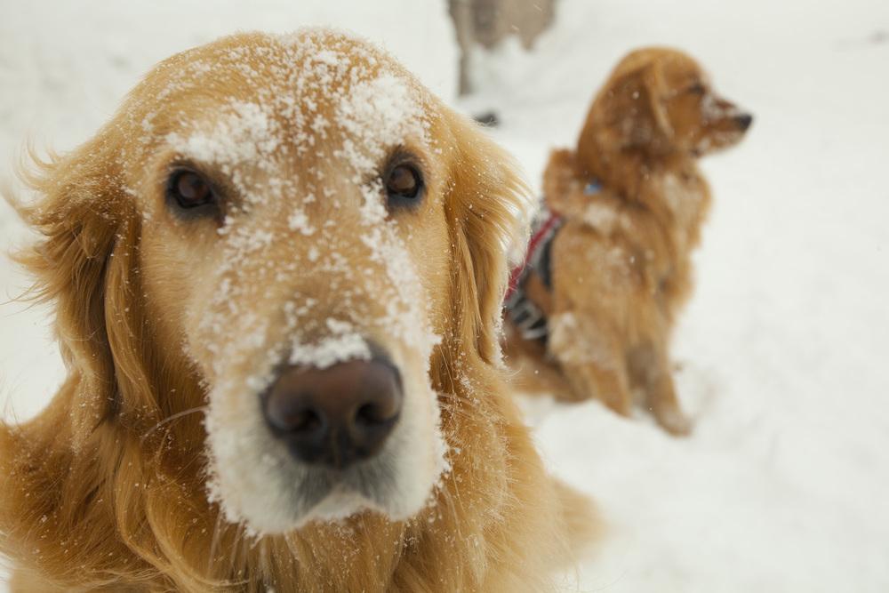 vail_henry_snow.jpg
