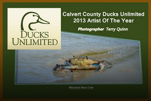 calvert county ducks unlimited artist of the year 2013 terry quinn photographer.jpg