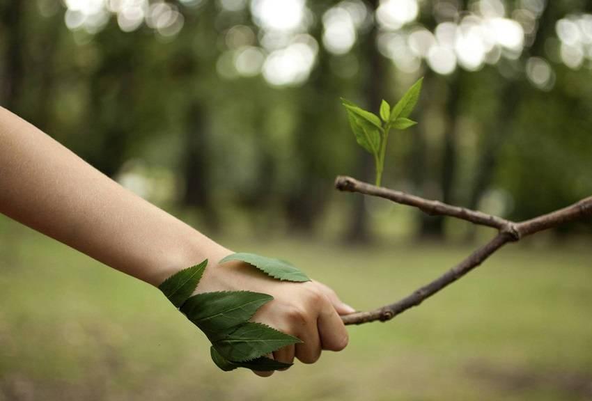 Help-the-Environment-Everyday-Life.jpg