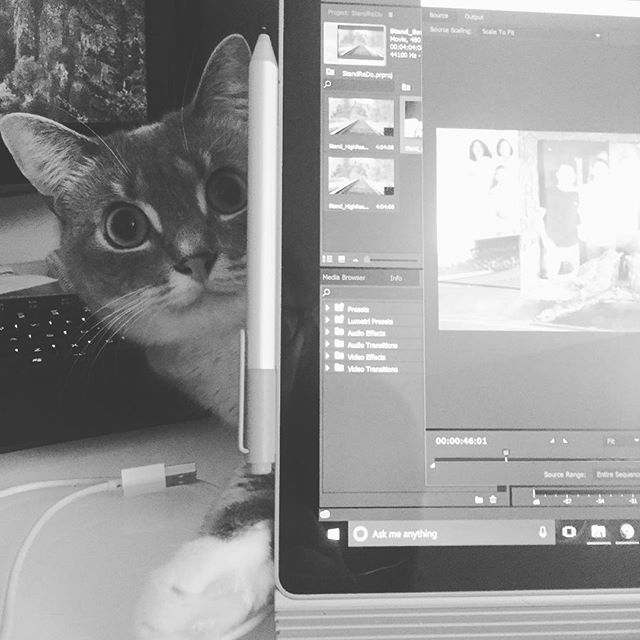 My little helper, as usual. #catsofinstagram #premierepro #editing #catladyproblems