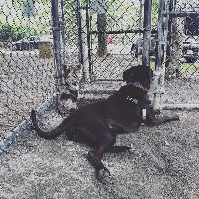 The dog park is the best place to make friends. #dogs #pupper #puppies #virginiaisforlovers