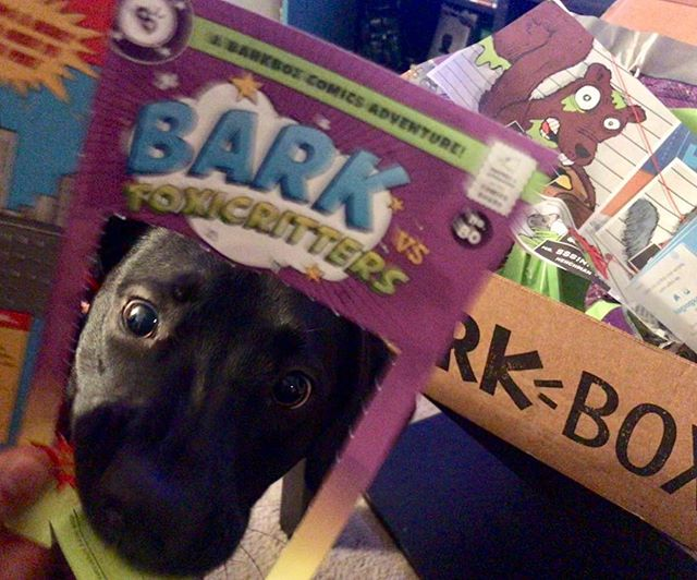 An attempt was made. #BarkBoxDay