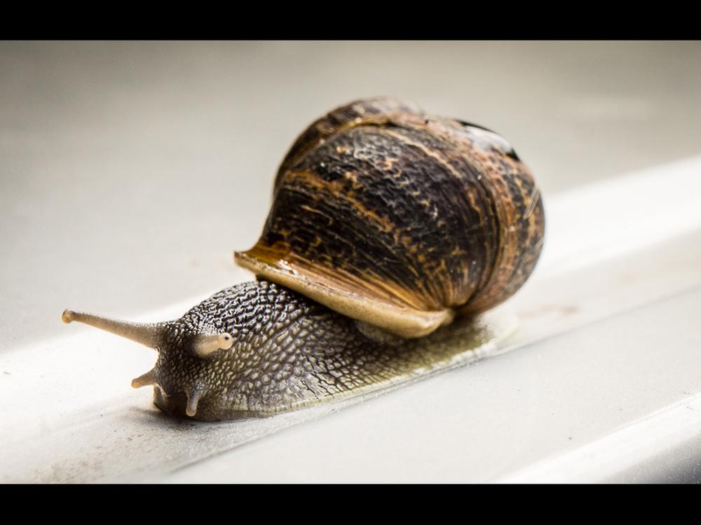 """""""Snail"""" - Tom Baker"""
