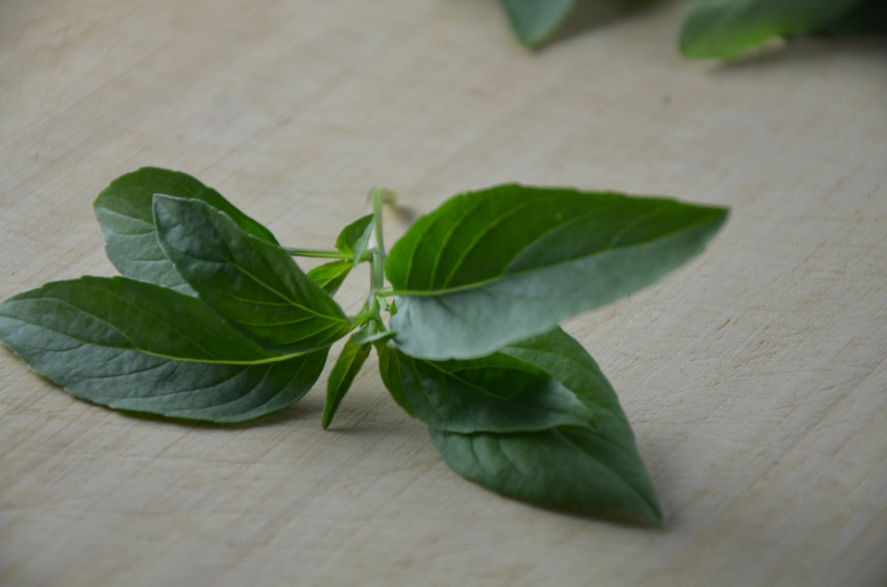Close up Thai Basil