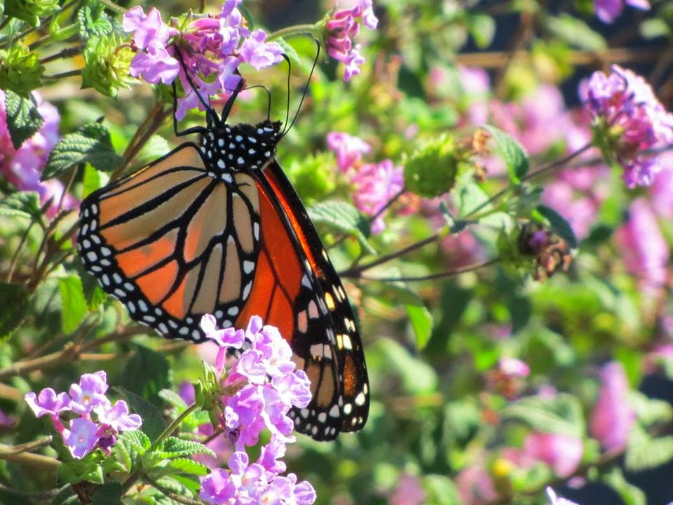 Butterfly+and+flower.jpg