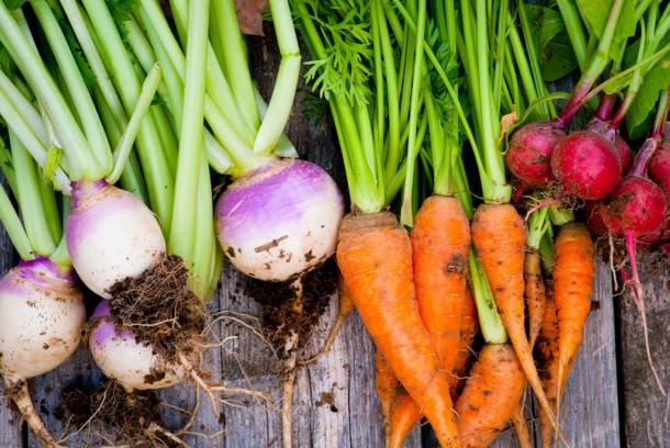 Holding Carrots.jpg