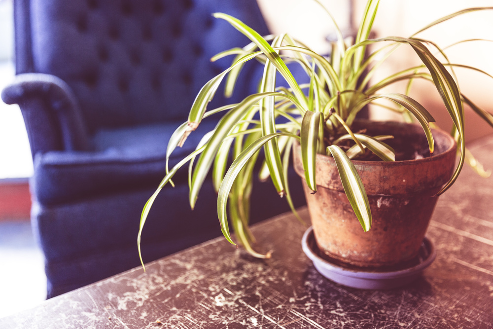 plant-on-table.jpg