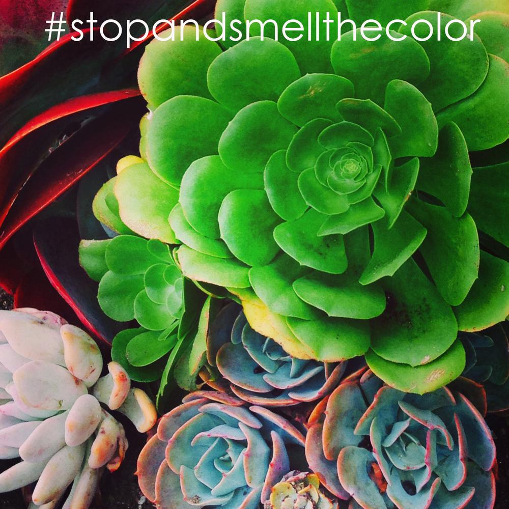 Succulents - Color Inspiration #devinecolor #impressyourself