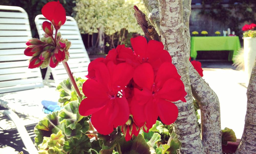 Red #devinecolor inspiration #impressyourself