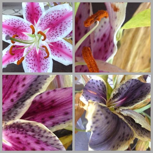 Beautiful ageing flowers