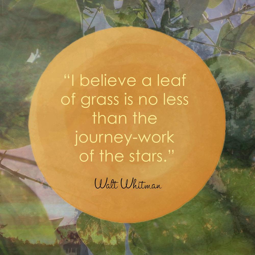 Devine Color Wisdom - Walt Whitman