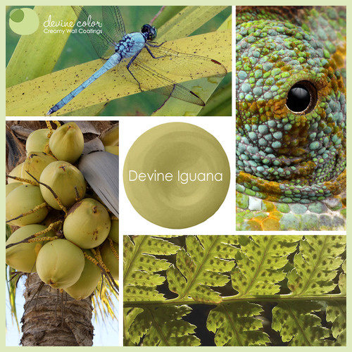 Devine Iguana is a perfectly handcrafted yellow green wall color. Part of Devine Color Wild Child paint color collection.