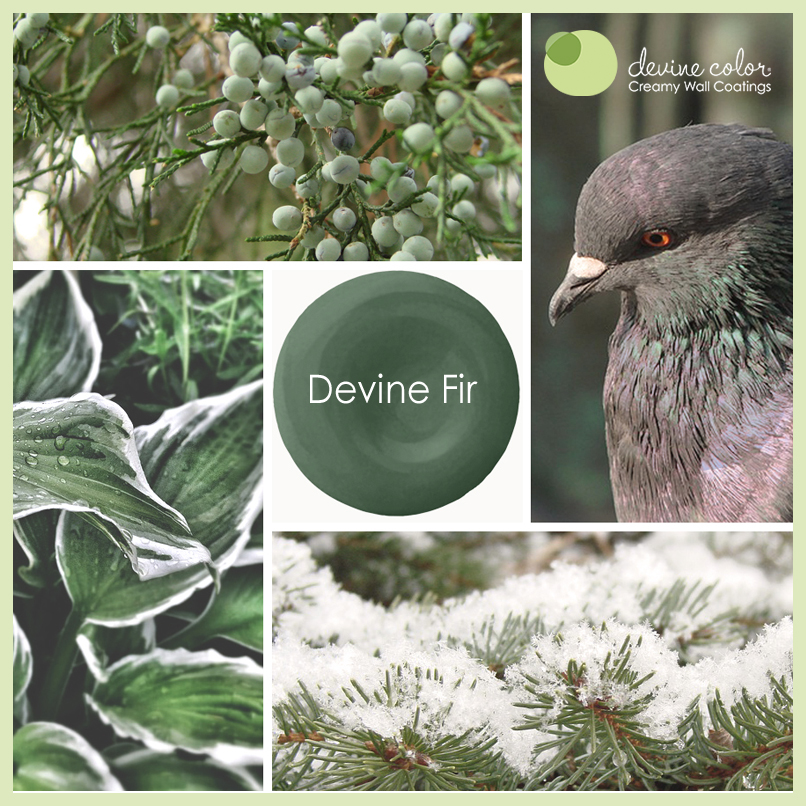 Devine Fir is a perfectly handcrafted traditional green wall color. Part of Devine Color Cool Grasses and Evergreens paint color collection.