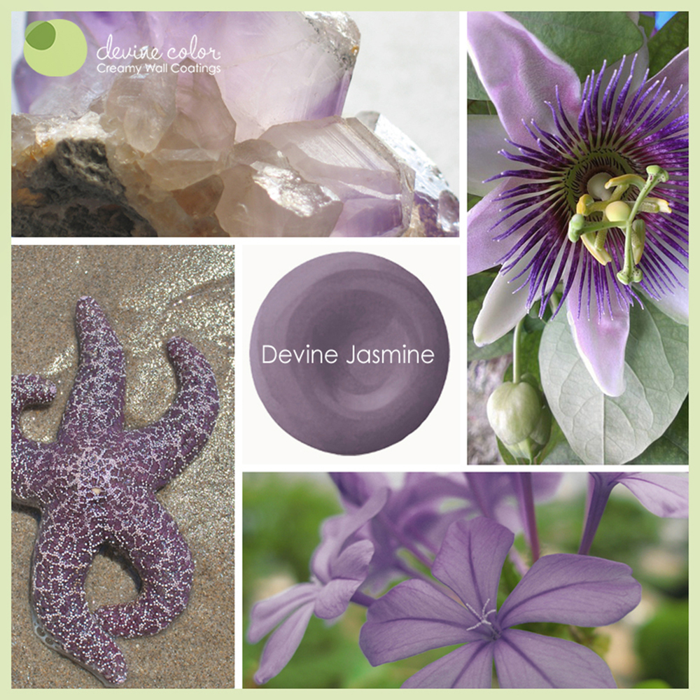 Devine Jasmine is a perfectly handcrafted beautiful purple wall color. Part of Devine Color Wild Child paint color collection.