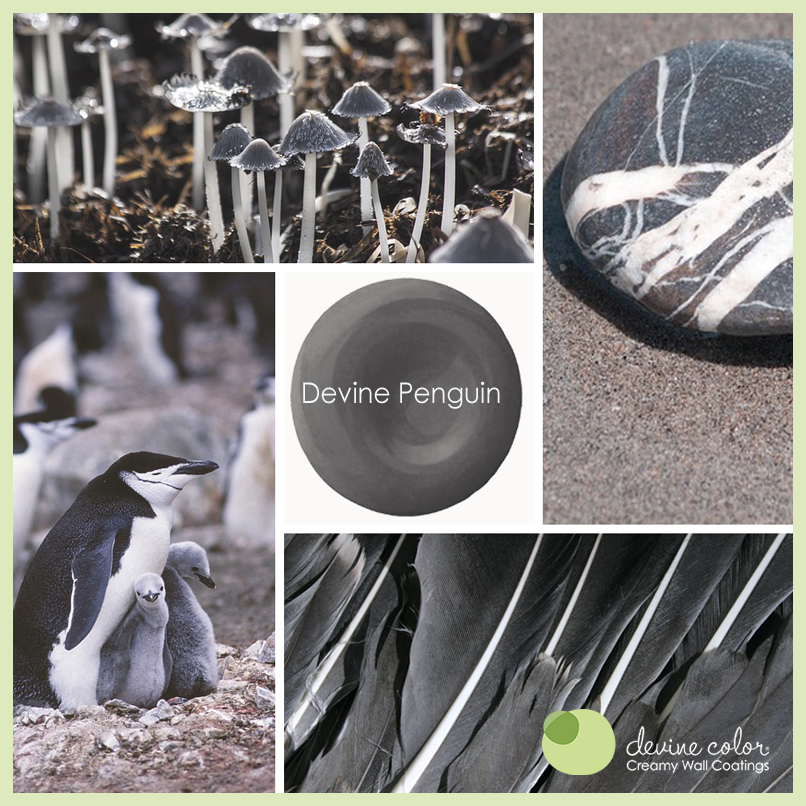 Devine Penguin is a perfectly handcrafted dark gray | grey wall color. Part of Devine Color Wild at Heart paint color collection.