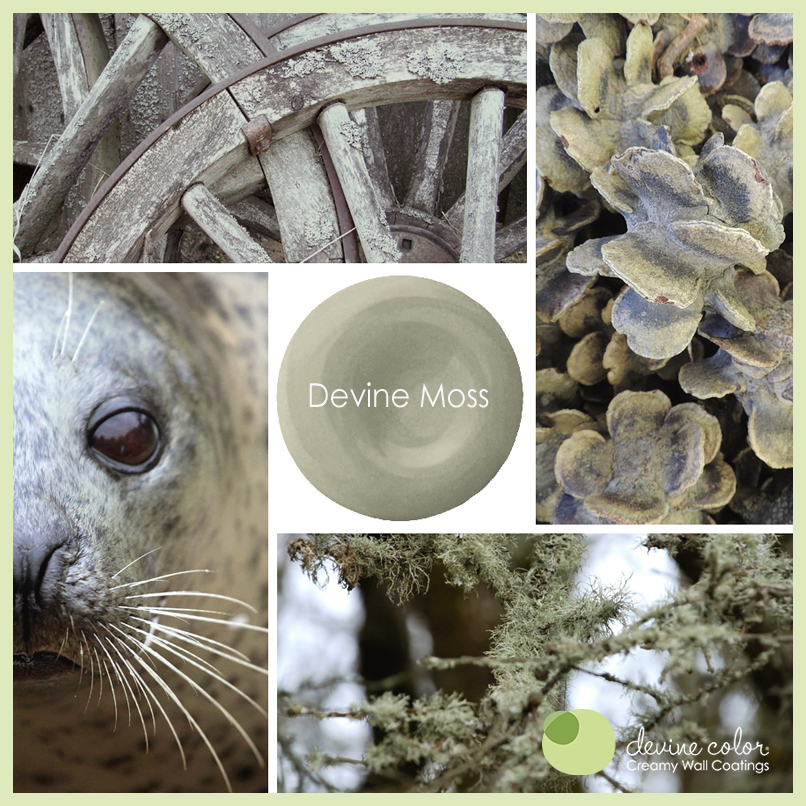Devine Moss is a perfectly handcrafted moss green wall color. Part of Devine Color Cool Grasses and Evergreens paint color collection.