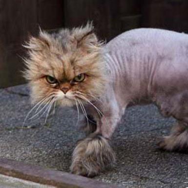 Mangy Cat.jpg