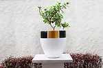 Satu Bumi - Painted GRC Pots 26.jpg