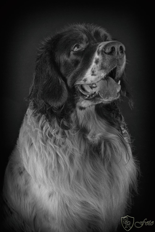 Hundeshoot