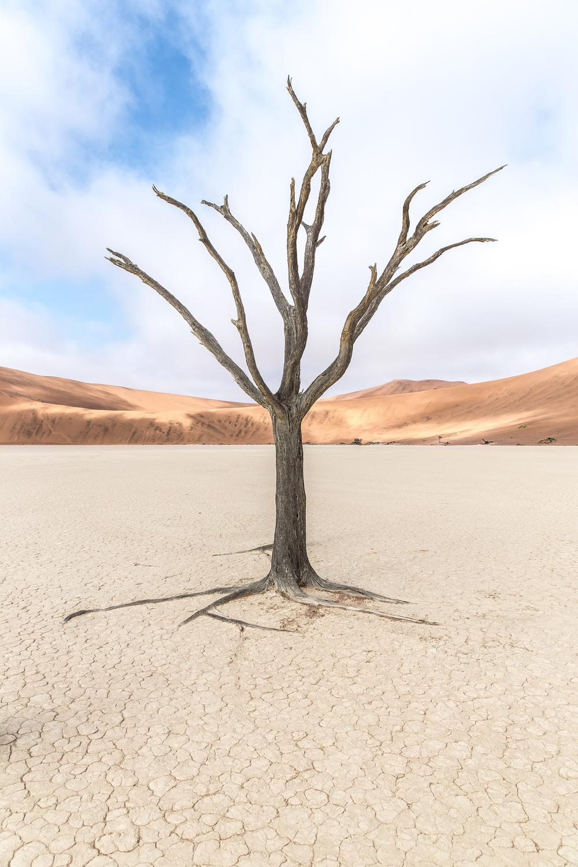 Deadvlei i Namibia ørkenen.
