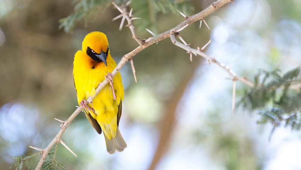 En fugl i Lake Nakuru National Park, Kenya