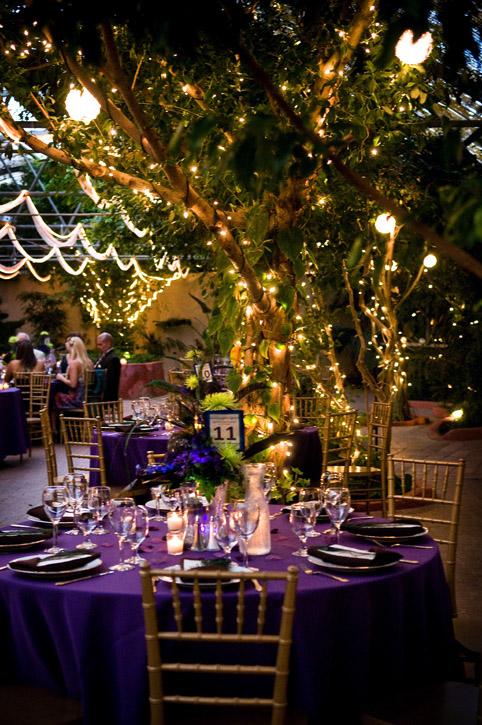WeddingPhotographer_BoojumTree06.jpg
